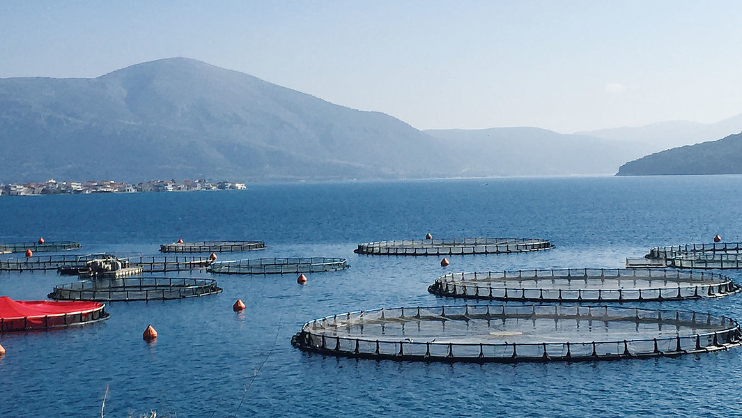 Global Warming Promises to Change Fish and Shrimp Farming
