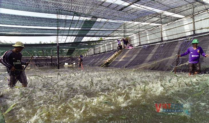 Đồng Nai invested heavily in hi-tech shrimp farming